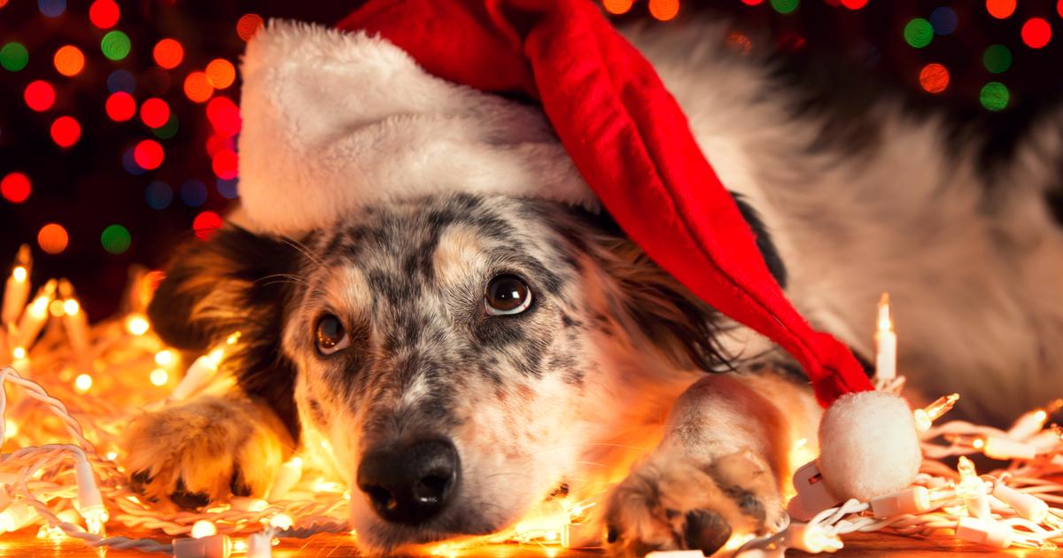 john lewis karácsonyi reklám